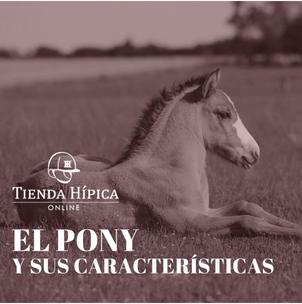 El pony y sus características